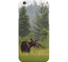 Grassy marsh moose - Algonquin Park, Canada iPhone Case/Skin