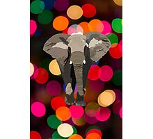 Elephant with Christmas Lights Photographic Print