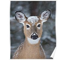 New Winter hat - White-tailed deer Poster