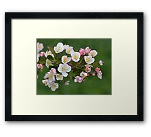 Early Spring Blossoms Framed Print