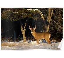 A Winters Sunset - White-tailed deer Buck Poster