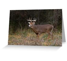 On the hunt - White-tailed Buck Greeting Card
