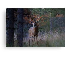 White-tailed Buck Metal Print