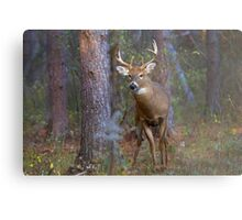 Who goes there? - White-tailed Buck Metal Print
