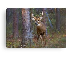 Who goes there? - White-tailed Buck Canvas Print