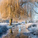 Winter in Bushy Park by Steve  Liptrot
