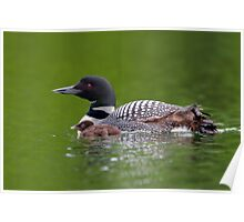 By her side - Common loon Poster