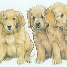 Golden Puppies by BarbBarcikKeith