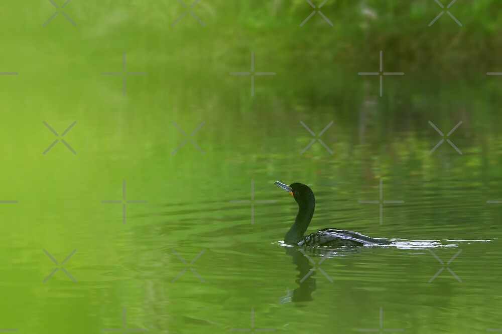Through a green dream - Double-crested Cormorant by Jim Cumming