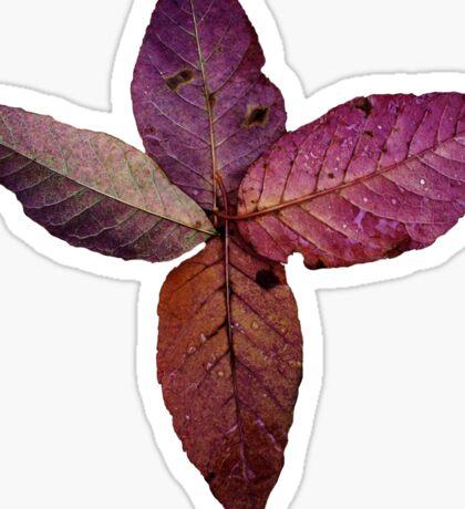 Leaf Spiral Sticker  Sticker