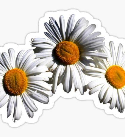 Triplet Daisies Sticker  Sticker
