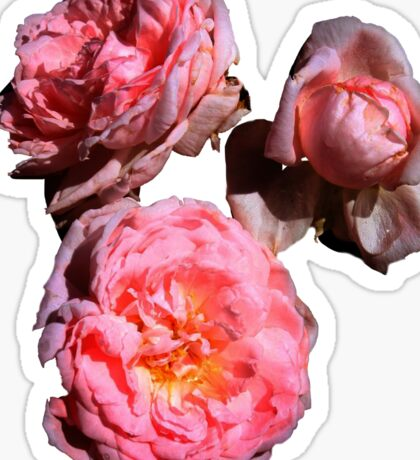Pink Rose Cluster Sticker Sticker