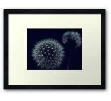 Dandelions at Night Framed Print