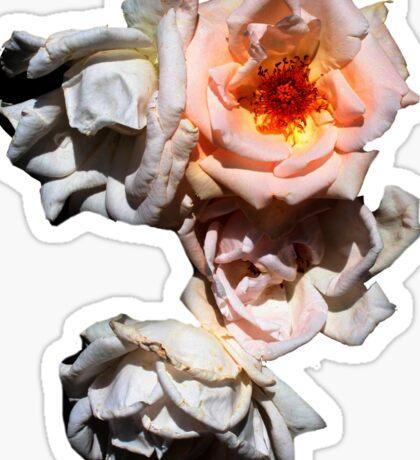 Rose Cluster Sticker  Sticker