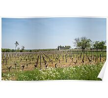 Budos Castle and vineyards Poster