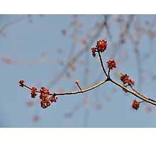 Spring Promise Photographic Print