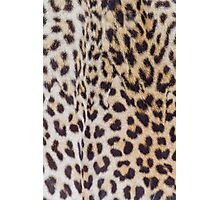 animal fur Photographic Print