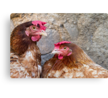 hen in the farm Metal Print