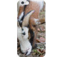 goat in the farm iPhone Case/Skin