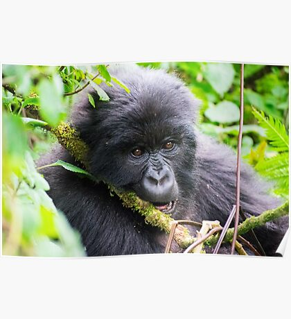 Pensive and Hungry Gorilla Poster