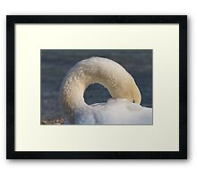 swan at lake Framed Print