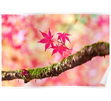 Autumnal pinks Poster