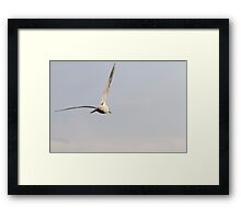 seagull fly on lake Framed Print