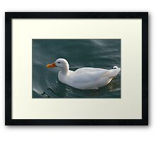 ducks on lake Framed Print