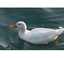 ducks on lake Photographic Print