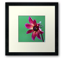 A red flower Framed Print