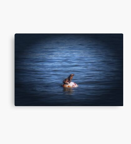 Boppin Along a baby sea lion basks on a buoy Seal Pup Canvas Print