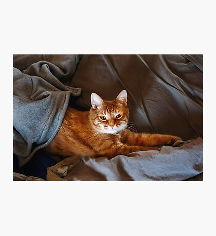 Cute Lazy Red Cat Photographic Print