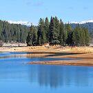 Jenkinson's Lake by Laura Puglia