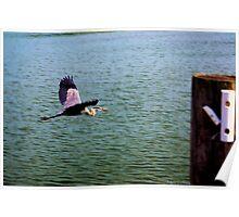 Heron in Flight Poster