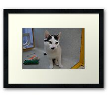 Half - Moustache Max the Cat Framed Print