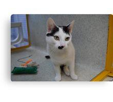 Half - Moustache Max the Cat Canvas Print