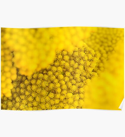 Yellow floral layers Poster