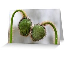 Poppy Buds in the rain. Greeting Card