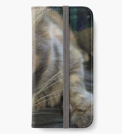 Kitty Stare iPhone Wallet/Case/Skin
