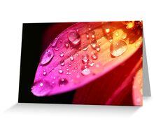 A wet petal Greeting Card