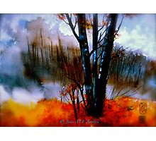 The Grove...Morning Mist Photographic Print