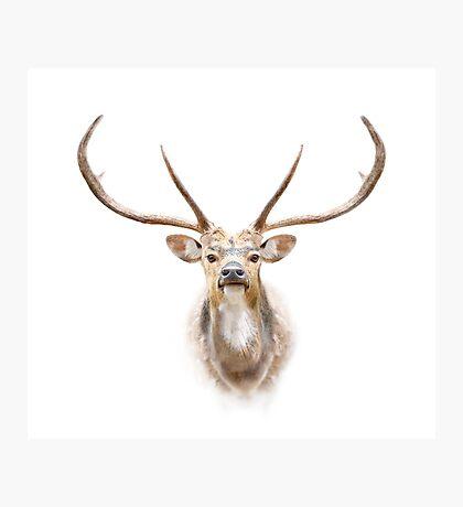 Deer face Photographic Print