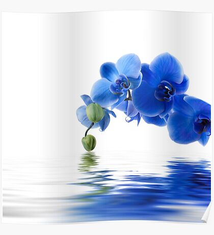 Beautiful Blue flower on designs Poster