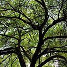 Oak Of Life by Cynthia48