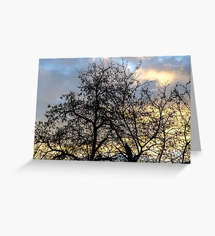 Winter trees at sunset Greeting Card