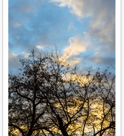 Winter trees at sunset Sticker