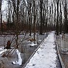 Icy Walk by Debbie Oppermann