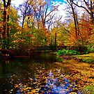 Fall foliage by Daniel Sorine