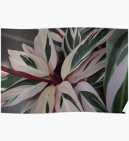 Pink leafy Flower Poster