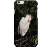 Snowy Egret in Mating Plumage  iPhone Case/Skin